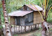 Old House In Borneo