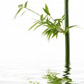 Reflection for bamboo Stock with green leaf