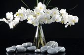 Beautiful orchid in vase with pebble on black