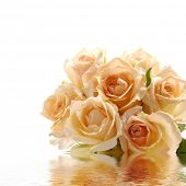 Reflection for bunch of orange roses