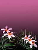 foto of hawaiian flower  - Hawaiian plumeria flowers and palm fronds over a deep purple background - JPG