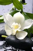 Wet stones and white flower with green leaf