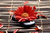 Flower with sunflower petals in the spa