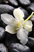 white flower with on pebble