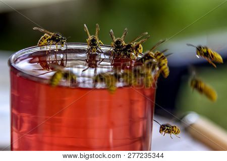 Wasps On Glass With Drink