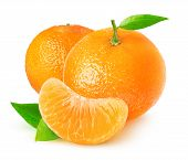 Isolated Citrus Fruits. Tangerines On White Background With Clipping Path poster