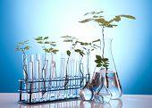 Plantas e laboratório