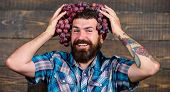 Farmer Proud Of Grapes Harvest. Man Hold Grapes Wooden Background. Fresh Organic Harvest. Farmer Bea poster