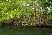Green Rainforest Nature. Green Rainforest River. Nature. Jungle Forest. Natural Environment. Forest  poster