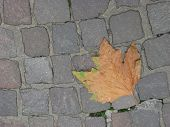 The Old Leaf On Older Coble Stones