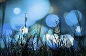 Lights And Grass