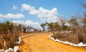 Savana Road