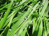 Grass with water drops