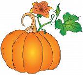 Fruit Of The Pumpkin