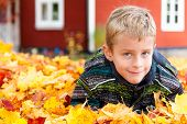 image of cheeky  - Cute young boy with a cheeky grin playing in colourful yellow orange autumn leaves which have fallen to the ground with the changing seasons - JPG