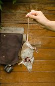 Woman Hand Hold Dead Rat On Rural Cellar Door