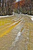 stock photo of tierra  - A wet muddy dirt road in a forest in Tierra del Fuego - JPG