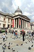 London, Trafalgar Square Pigeons