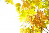 Autum Leaves Over White
