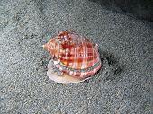 Living Shell underwater