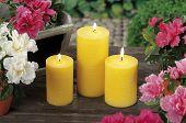 Lemongrass Candles For Mosquito's Prick