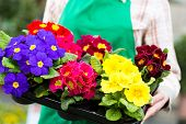 Female florist or gardener in flower shop, greenhouse or nursery