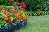 picture of zinnias  - A close - JPG