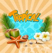 vector tropical banner with seashells, starfish