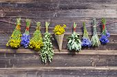 Many Summer Medical Herbs Bunches On Wooden Wall