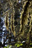 Epiphytic mosses