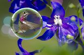 Humming Birds In Bubbles