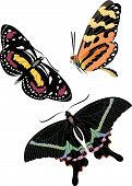 Realistic Colorful Butterfly Set