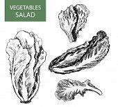 Salad - set of vector illustration