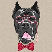 pic of headdress  - hipster dog Cane Corso breed in a glasses and bow tie - JPG