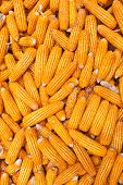 picture of corn cob close-up  - Close up golden dried corn cob background - JPG