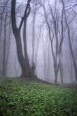 Mysterious forest with strange tree in a forest with fog and green plants in spring