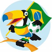 picture of toucan  - Brazilian toucan - JPG
