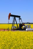 stock photo of nonrenewable  - A pump jack in a canola field in southern alberta - JPG