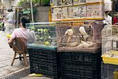 HONG KONG - MAY 11, 2014: Asian street stall woman with her birdcage in famous attraction of BIRD STREET a the district of Mong Kok, Hong Kong, Asia.
