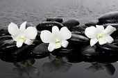 three white orchid on wet stones �¢�?�?wet background