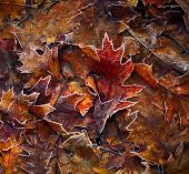 Autumn leaves background. Shallow DOF