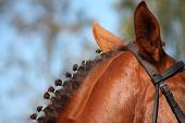 Chestnut Horse Mane Close Up