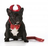 french bulldog wearing devil costume