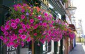 stock photo of public housing  - British public house flower decoration - JPG