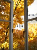 Open Window And Trees