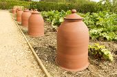 Terracotta Rhubarb Forcing Pots In A Row.