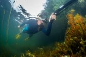 stock photo of spearfishing  - Underwater shot of the hunter with spear gun in the lake - JPG