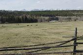 Spring pasture. Tunkinskaya valley, Buryatia
