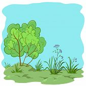 Garden with a bush