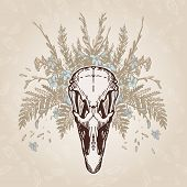 stock photo of ostrich plumage  - Ostrich skull on a plumage background - JPG